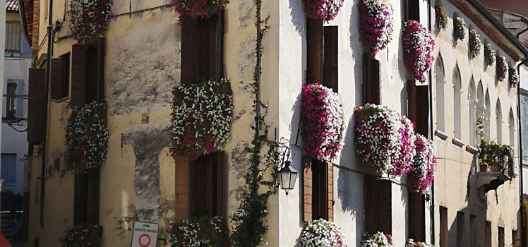 Asolo flowers