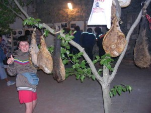 Ham tree in Tolfa