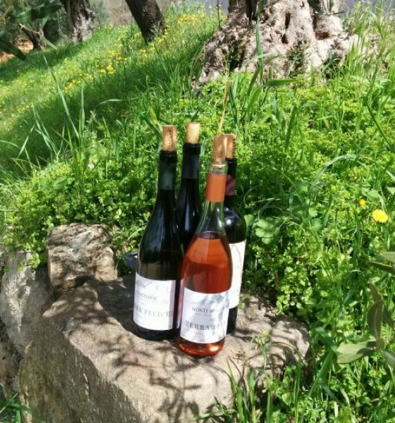 Quick preview of Terra Felice Wine in the Euganean Hills