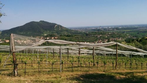 wine tour of veneto
