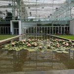 Orto Botanico of Padua