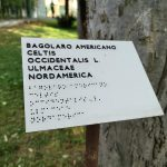 Biodiversity orto botanico of padua