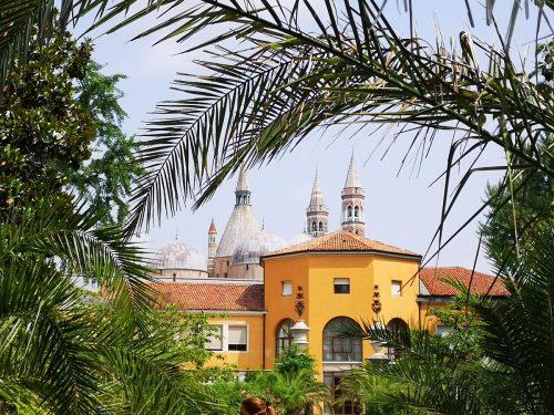 Orto Botanica of Padua